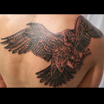 Falcon Tattoo Meanings Itattoodesigns