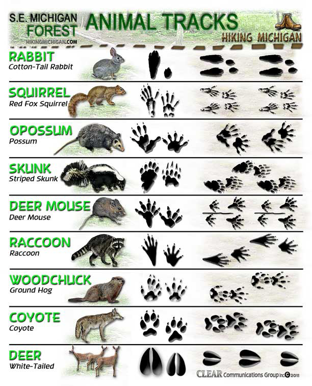 Paw_print on Animals With Fur Worksheet Kindergarten